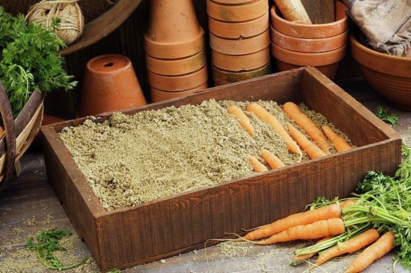 Что добавить в песок, чтобы морковь хорошо хранилась