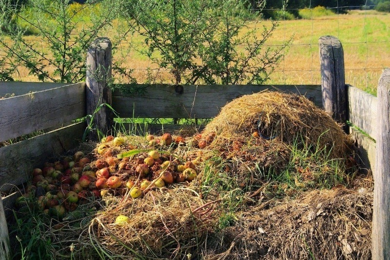 Подкормка для червей в сентябре увеличивает плодородие почвы