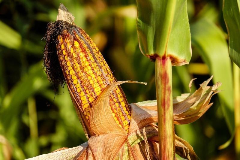 Что можно посадить в октябре на даче, чтобы получить урожай раньше других