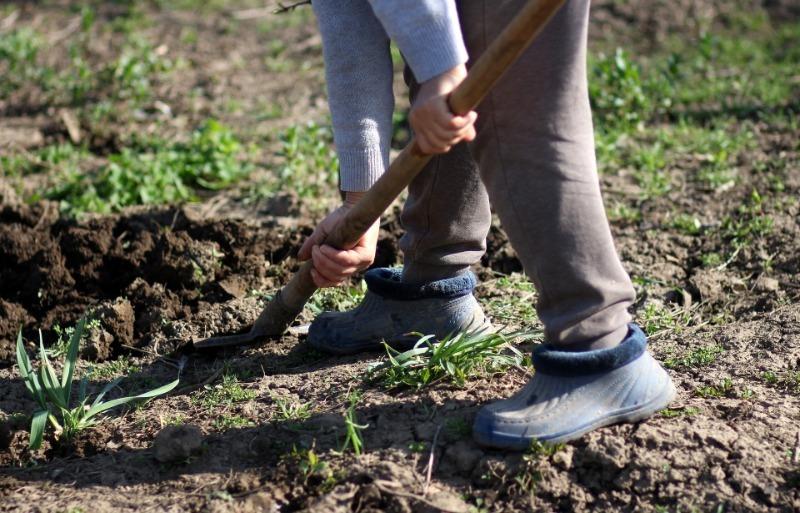 Зачем нужна осенняя перевалка земли и когда ее лучше не делать
