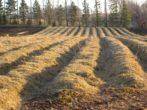Как и когда консервировать огород для повышения его плодородия