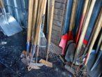 Пора заготавливать черенки — какие деревья можно использовать