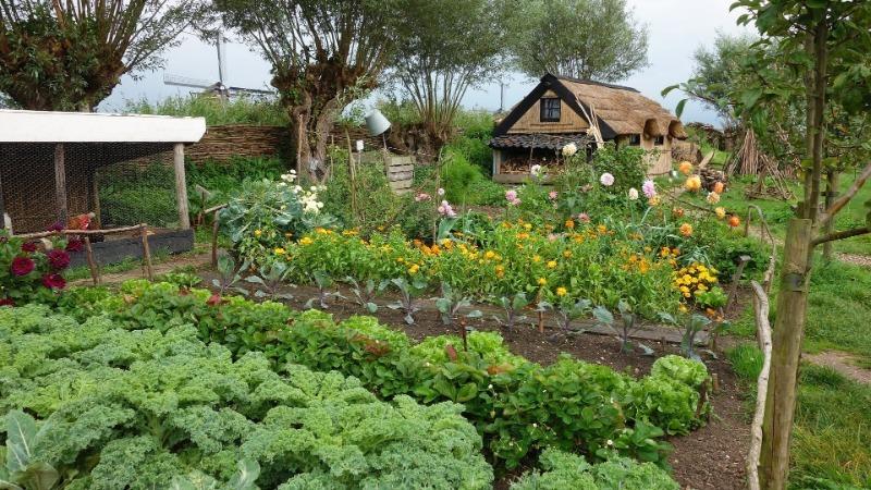 Как расположить грядки и увеличить урожай овощей в 2 раза