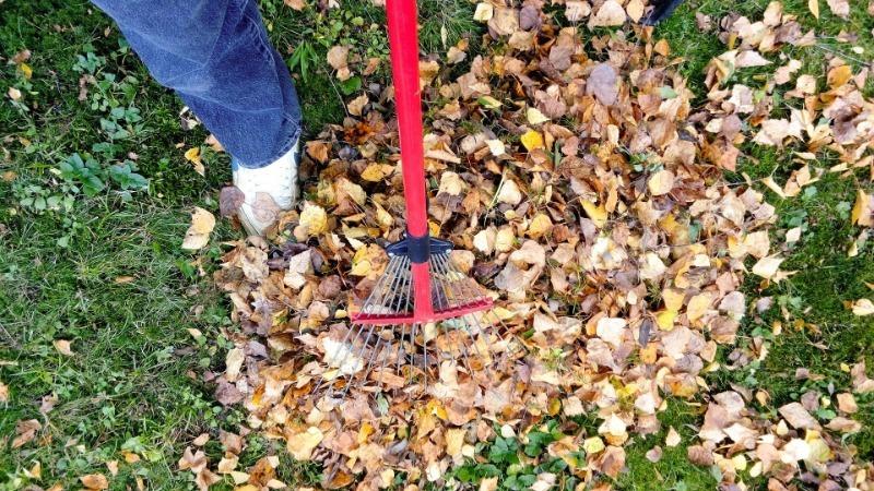 Как за зиму сделать перегной из листьев и опила для богатого урожая