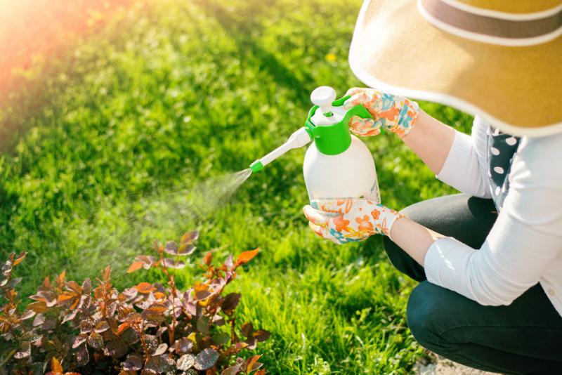 Как обработка хелатом железа в октябре поможет справиться с хлорозом