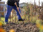 При какой температуре нужно переворачивать землю осенью и для чего