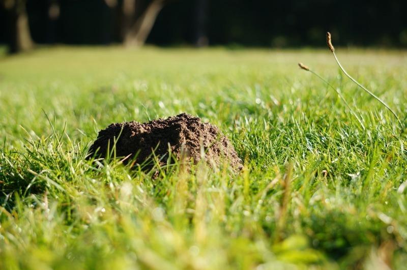 Какую сетку использовать осенью на участке, чтобы не было кротов и мышей