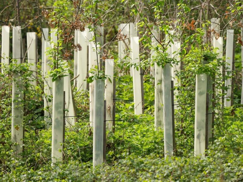 Посадка семечковых деревьев в октябре для их быстрого развития