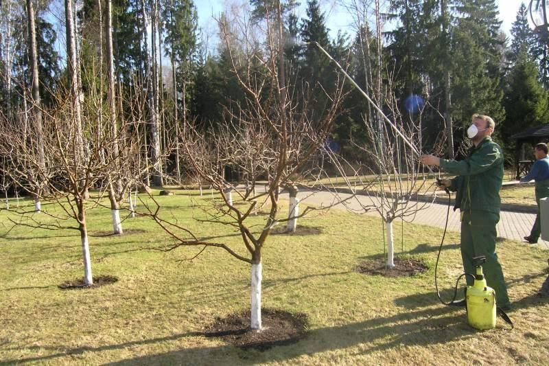 Чем подкормить яблони весной, в том числе чем удобрять до цветения, виды удобрений и подкормки, схема, как подкармливать и прочее