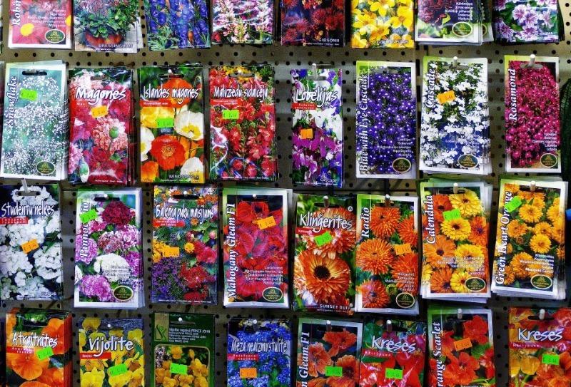 5 способов отличить контрафактные семена