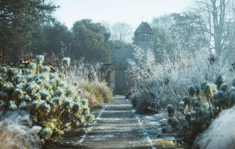 Сезонные работы в саду, которые нужно успеть в декабре